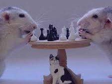 """موش از عطسه خوک زاده شده و گربه از عطسه شير"""""""